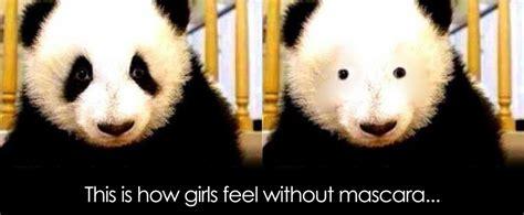 Panda Mascara Meme - panda without eye makeup mugeek vidalondon