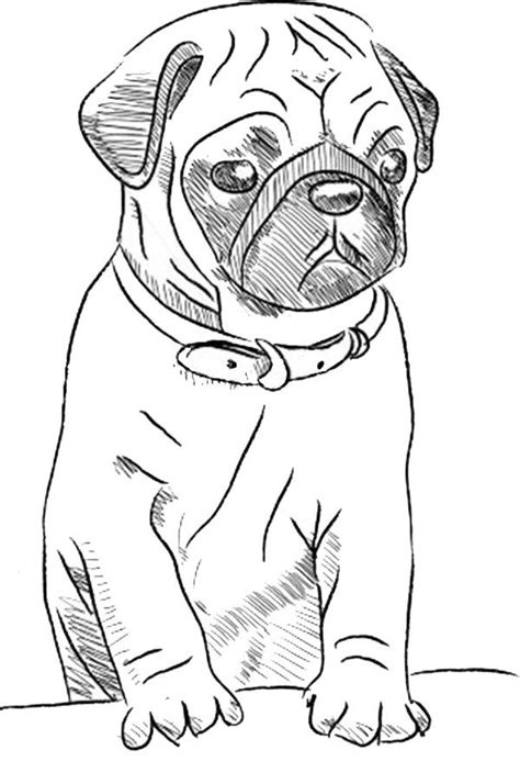 printable drawing pages  wolves puppy sketch dog drawing simple pug art