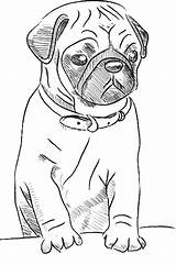 Pugs Printable Pages Drawing Google Pug Dogs Mops Bs Gemerkt Von sketch template