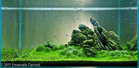 setup aquascape my planted aquarium imod