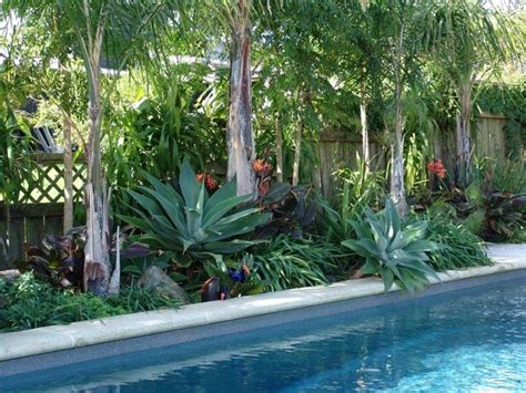tropical pool landscaping subtropical pool landscaping tropical plants for pool area pinterest backyards agaves and