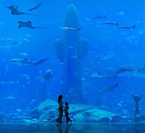 atlantis hotel aquarium dubai the atlantis hotel in dubai cheapest room 35 000 a
