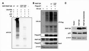 E3 Ubiquitin Ligase Rnf126 Promotes Cancer Cell