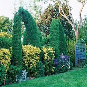 Best 25+ Tall shrubs ideas on Pinterest