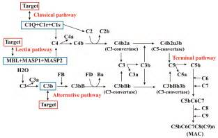 Complement System Pathways