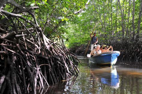 travelingyukcom hutan mangrove  sejuk  keren