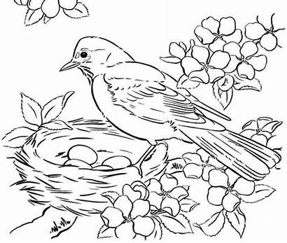Birds Printable Coloring Pages Adult Bird Winter