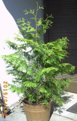 Garten Pflanzen Verkaufen by Garten Pflanzen Zu Verkaufen Local24 Kostenlose