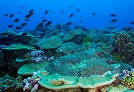 Atoll Definition  Atoll Island Definition