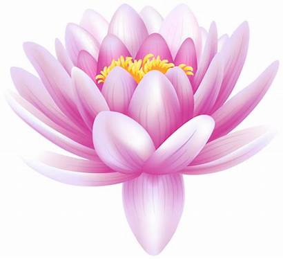 Lily Flower Water Clip Clipart Lotus Flowers