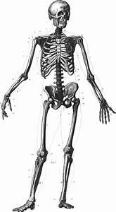 Silkadze  20  Fantastic Ideas Full Body Human Anatomy Drawing