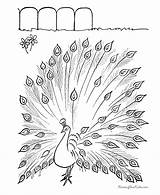 Coloring Feathers Pages Popular sketch template