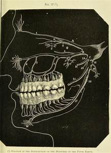 1000  Images About Mouth   Teeth On Pinterest