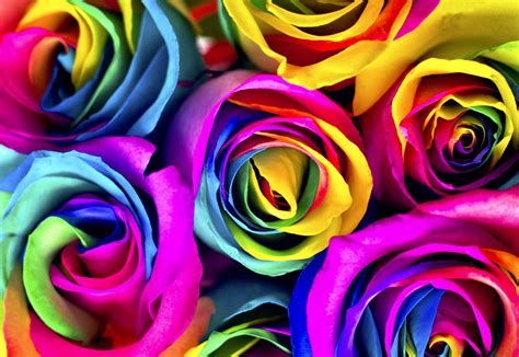 Tye Dye Desktop Wallpaper Flowers To Dye For How To Make Rainbow Roses Jewish Journal