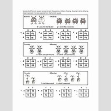 Genotypes And Punnett Square Worksheets By Haney Science Tpt