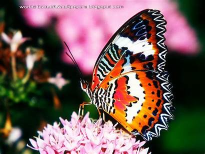 Butterflies Butterfly Wallpapers Pretty Nice Animal Animals