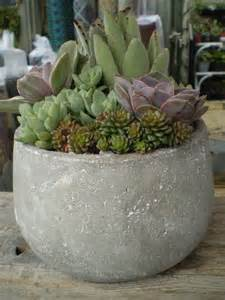 succulent garden in large pot outdoors