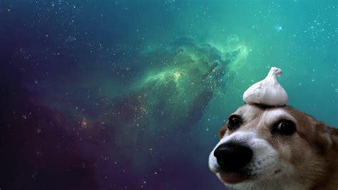 Permalink to Animal Aesthetic Wallpaper