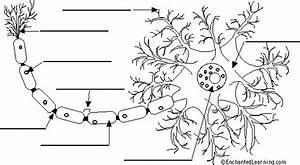 Label Neuron Anatomy Printout