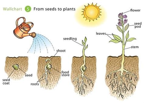 how to grow flowers seeds to grow plants and vegetables