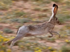 Run Like A Jackrabbit