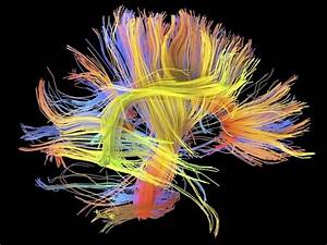 Neurociencia  M U00fasica En La Ciencia   Junio 2016