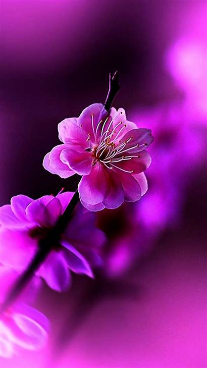Flowers Flower Mobile Iphone Wallpapers Spring Dp