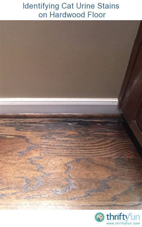 related guides repairing floors damaged by pet urine