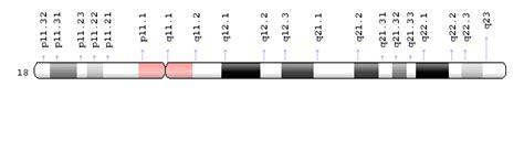 chromosome  genetics home reference nih