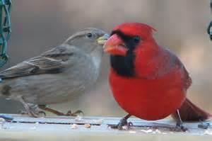 Michigan Winter Birds