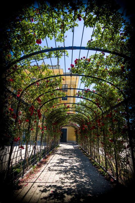 imperial roses gardens  schoenbrunn palace  vienna