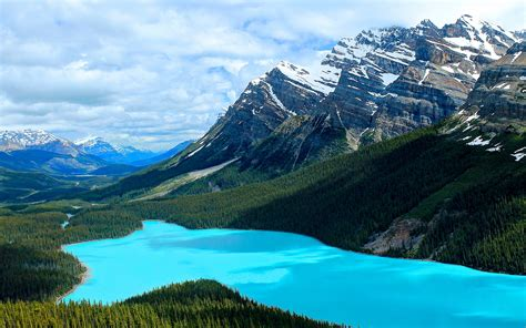 Lake Wallpaper Peyto Canada Hd Desktop Wallpapers 4k Hd