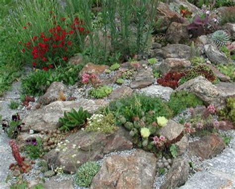 Verwendung Im Garten  Sempervivumde  Pflanzen Onlineshop