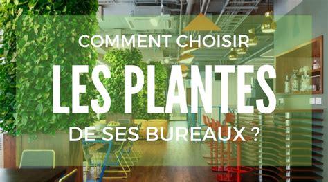 plante pour le bureau quelles plantes sans entretien choisir pour vos bureaux