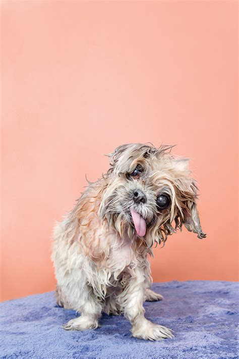 Funny P Os Of Wet Dogs P Ographed By Sophie Gamand Reckon Talk