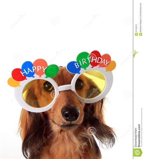 Happy Birthday dachshund stock image. Image of isolated ...