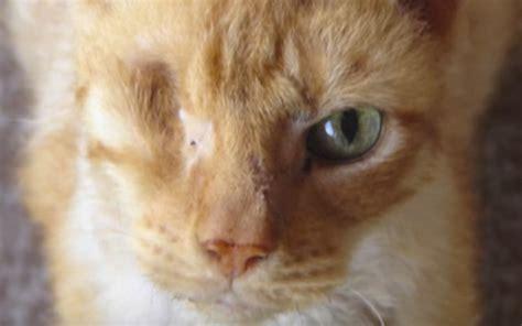 good stop animal abuse slogans blogcastfm