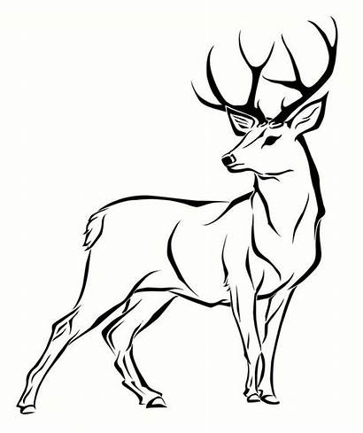 Deer Coloring Pages Printable Drawings Forest Animals