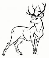 Deer Coloring Pages Clipartmag sketch template