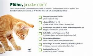 Sauna Bei Erkältung Ja Oder Nein : fl he bei hunden themenshop medpex versandapotheke ~ Whattoseeinmadrid.com Haus und Dekorationen