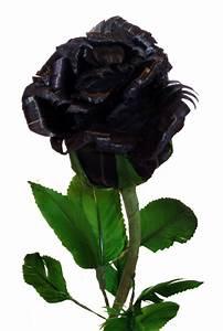 Real Black Roses |Rose Wallpapers