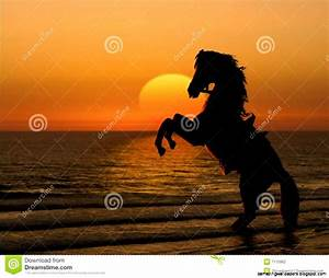 Horses In The Sunset On The Beach | Amazing Wallpapers