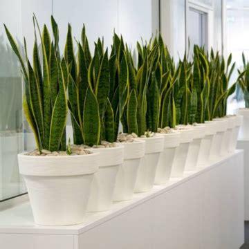 Zimmerpflanzen Wenig Wasser by Pflanzen Die Viel Sonne Vertragen Und Wenig Wasser