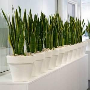 Zimmerpflanzen Die Wenig Wasser Brauchen : pflegeleichte zimmerpflanzen pflanze im topf ~ Frokenaadalensverden.com Haus und Dekorationen