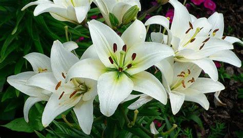 tanaman hias  cantik  halaman rumah