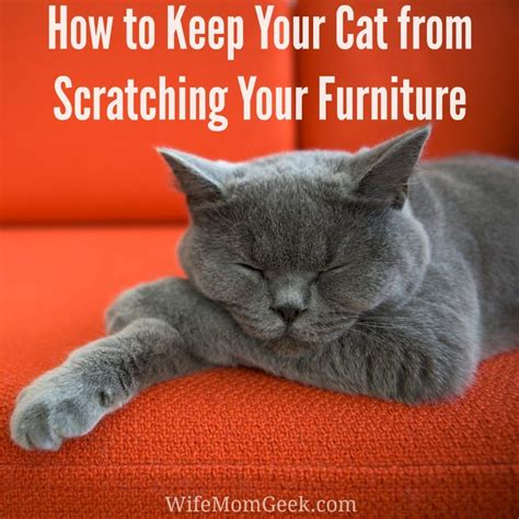 Stop Cat From Scratching Furniture by How To Stop A Cat From Scratching Your Furniture