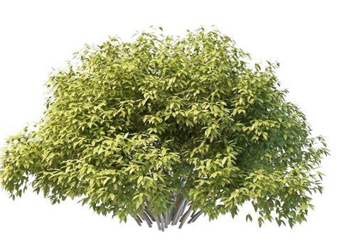 shrubs burning bush plant 3d model 3ds max files free