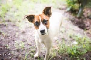 Donate Now - Orange County Humane Society of VA