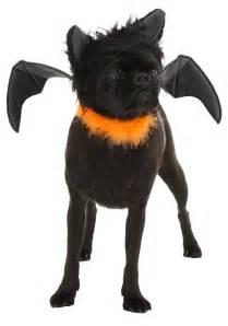 bat cat costume pet bat costume