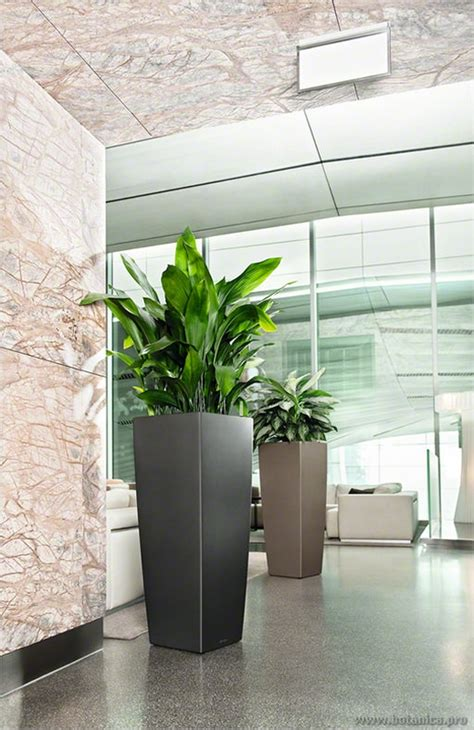 contemporary indoor plants the best lighting for aglaonema